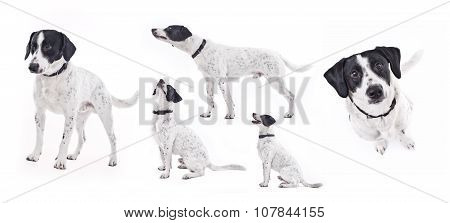 Domestic dog in different poses