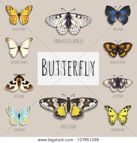 Set of butterflies with space for text