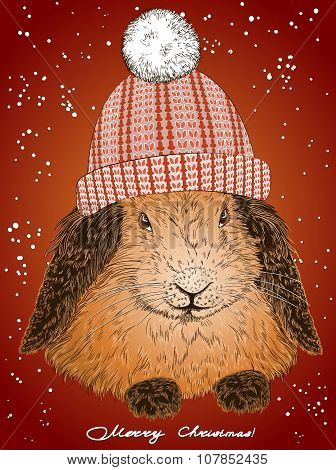 Funny Bunny In A Warm Hat