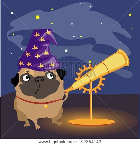 Scientist dog pug watching the stars