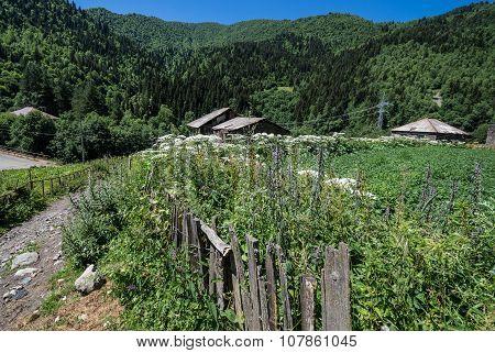Road To Ushguli