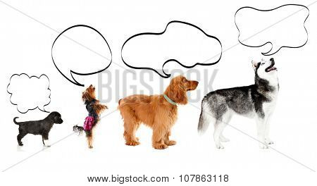 Dogs with empty cloud bubble above heads, isolated on white