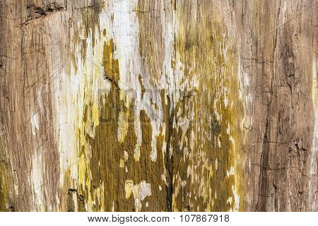 Petrified Wood Texture Background