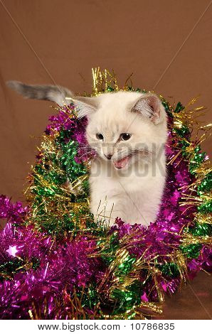 Really cute meow christmas kitten