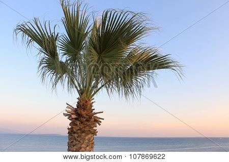 Palm tree growing on the shore of the Aegean landscape