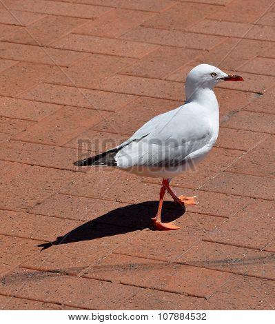 Sea Gull's Perfect Shadow