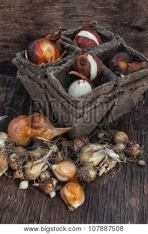 Bulbs And Seeds For Planting