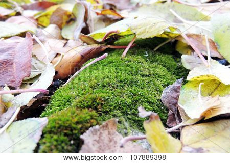 Moss growing on a tree trunk