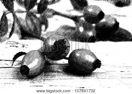 Illustration Of Rosehips