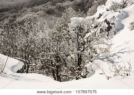 Deciduous White Forest In Winter, Natural Scene