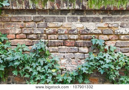 Old Red Brick Wall With Green Plant