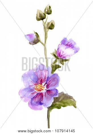 Pink Mallow Flowers.  Watercolor hand painted illustration