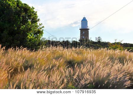 Woodman Point Lighthouse and Wild Purple Grasses