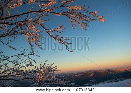Frosted Tree Against Mountain Sunset