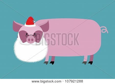 Santa Claus Pig. Farm Animal With Beard And Moustache. Christmas Cap. Funny Pork For New Year.