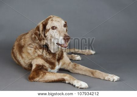 Big Spotted Dog In Studio
