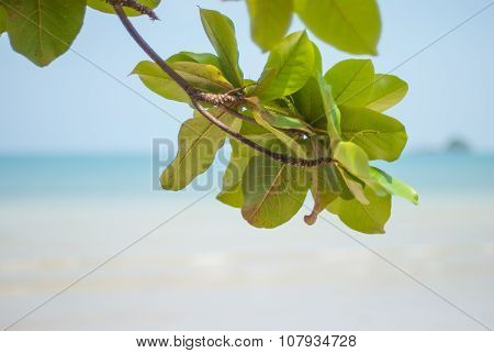 The branches of the tree on the background of the sand on the beach of the island Koh Chang in Thail