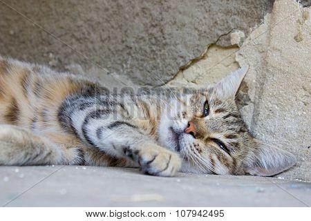 wandering cat sleeps