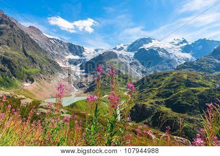 Swiss Alps With Wild Pink Flowers