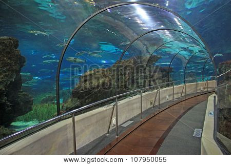Barcelona, Catalonia, Spain - December 14, 2011: Transparent Tunnel In Barcelona Aquarium In Barcelo