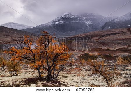 lonely tree standing in the autumn in the valley among the mountains, landscape, Norway