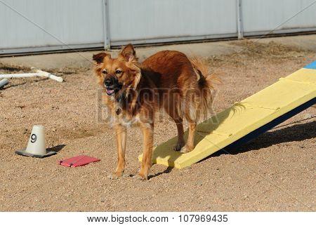 Dog Agility: Dog Walk
