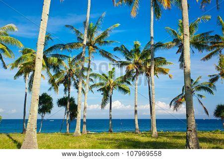 Summertime at the beach. Ocean. Indonesia. Summer