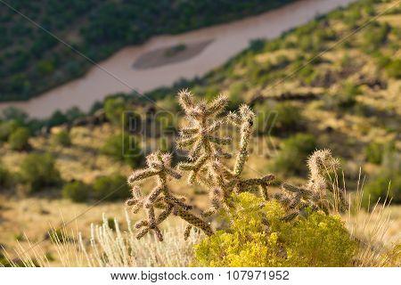 Cactus Plant On White Rock Canyon Rim