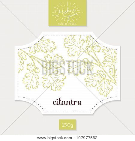 Product sticker with hand drawn cilantro or coriander leaves. Spicy herbs packaging design