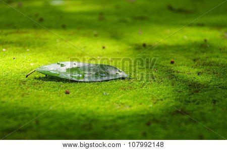 drop of water on dry leaf