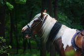 Постер, плакат: Spotted Pony in a mysterious forest