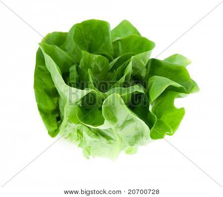 Fresh butterhead salad lettuce (also known as Boston, Bibb, Buttercrunch, and Tom Thumb, Arctic King) isolated on white.