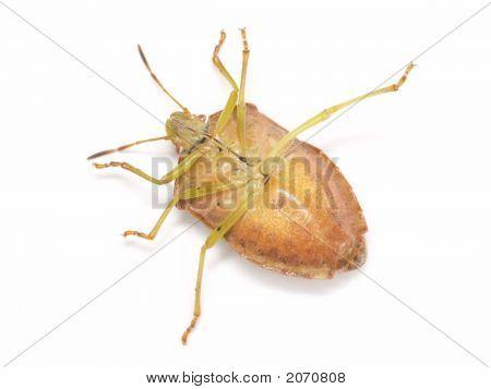The Fallen Bug
