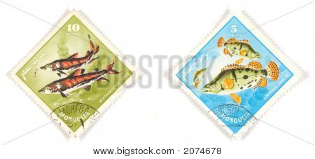 Fish Of Mongolia On Stamps