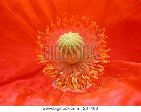 Flower Detail In Color
