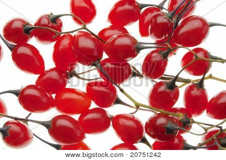 Red Poisonous Berries Of The Nightshade
