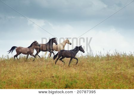 Four Running Horses In The Steppe