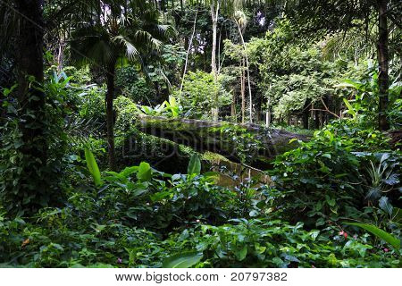 Atlantic forest
