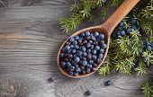 Wooden spoon with seeds of juniper. Juniper branch with berries.  poster