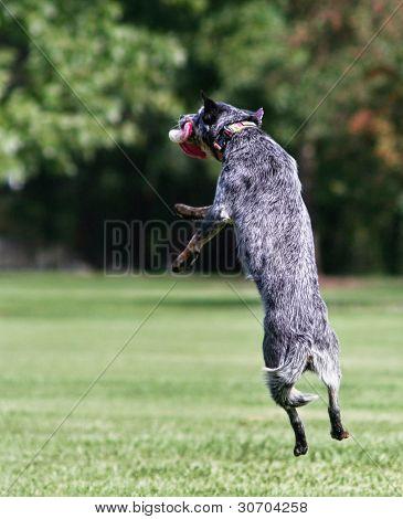 a dog playing fetch