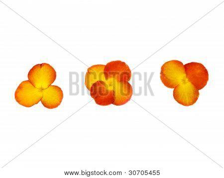 Press Orage Rose Flower
