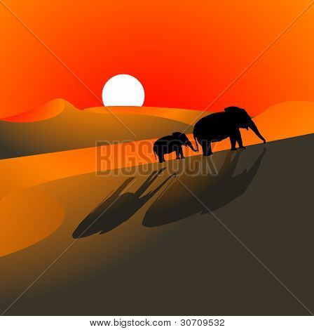 Elephants Desert Sundown