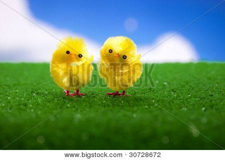 happy easter chicks on the grass