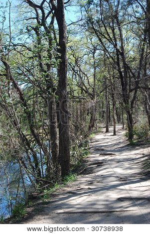 A wilderness trail with sun and shade