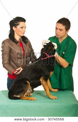 Veterinary Examine Dog