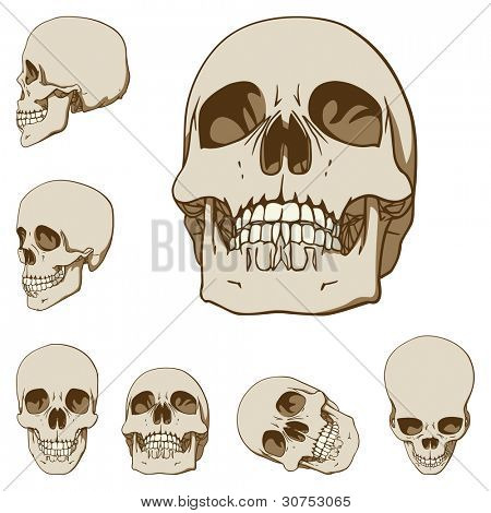Set of six drawings of human skull. Vector illustration
