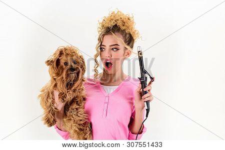 poster of Vet. Dog Grooming. Pet Salon. Petshop. Dog Salon. Beauty Salon For Animals. Grooming Master Making D