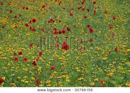 Colorful Summer Meadow With Yellow And Red Flowers