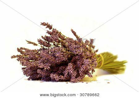 Levander Spa Flowers
