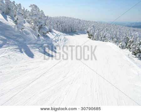sunny day ski trail